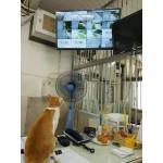 В Тольятти умный кот выследил по камерам мышь и поймал ее